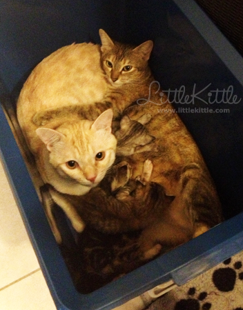 true-love-cat-family-littlekittle