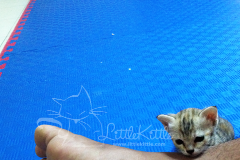 littlekittle-kitten-2013-1